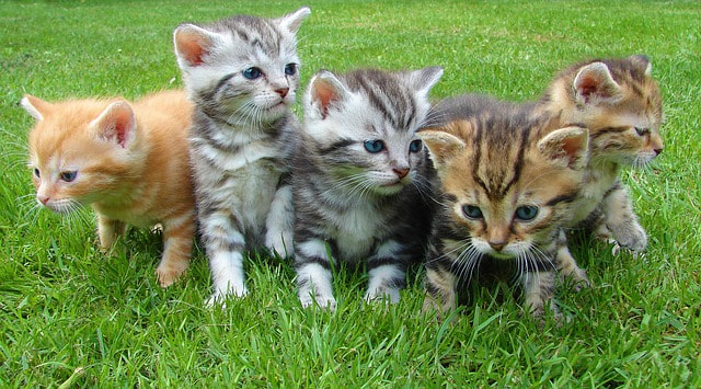 5 Kittens looking Curious